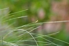 rupsje (wjrpics) Tags: rupsje zonnestralen gras groen caterpillar