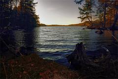 Forest afternoon (TheStolpskott) Tags: naturereserve nationalpark forest lake shore water blue trees sky sunset afternoon evening sweden göteborg delsjön