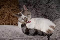 Magui007 (Matias Lynch) Tags: cat cats animal wild wildlife feline domestic buenosaires argentina