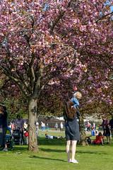 Hamish spies a tree (timnutt) Tags: parkland xt2 tree northampton northamptonshire wicksteedpark children child people fuji 35f2wr park toddler 35mm fujifilm kettering