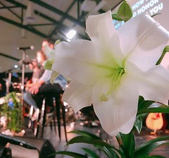 It's our Easter Celebration tomorrow morning at 10:30 AM! See you tomorrow! 🌸 (rcokc) Tags: it's our easter celebration tomorrow morning 1030 am see you 🌸