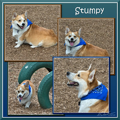 Stumpy (bjarne.winkler) Tags: the corgi stumpy poster