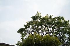 _1011188.jpg (plasticskin2001) Tags: leaf micronikkor f28s ai 55mm
