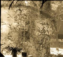 Ventana al atardecer. Window al sunset. (Esetoscano) Tags: ventana window transparencia transparency atardecer sunset contraluz backlight siluetas silhouettes plantas plants contrastes contrasts ventanasaloincierto windowstowardstheuncertain esetoscano