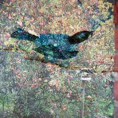 Le calme revient (andrefromont) Tags: andréfromont andrefromontfernandomort fernandomort bird oiseau spring printemps