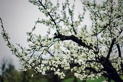 Evergrow (Mathias Heller) Tags: tree sonya7iii sonnartfe1855 sonnar5518za sony zeiss