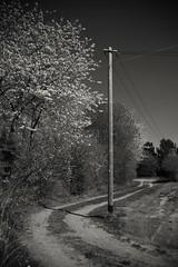 Stralsund / Devin (tom-schulz) Tags: eos6d ef2890 monochrom sw bw outofcamera ooc stralsund thomasschulz weg strommast