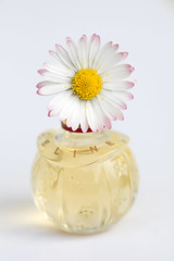 still-life 21-04-2019 024 (swissnature3) Tags: stilllife macro flowers flacon