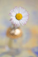 still-life 21-04-2019 023 (swissnature3) Tags: stilllife macro flowers flacon