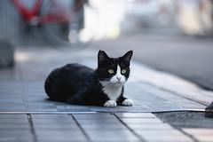 猫 (fumi*23) Tags: ilce7rm3 apsccrop 85mm fe85mmf18 sel85f18 a7r3 animal alley katze gato cat chat neko bokeh dof ねこ 猫 ソニー