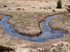 kanyar / bend (debreczeniemoke) Tags: tavasz spring izvora forrásliget izvoare fű grass patak brook kanyar bend olympusem5
