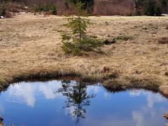 ég a földön / sky on earth (debreczeniemoke) Tags: tavasz spring izvora forrásliget izvoare tőzegláp bog tó pond olympusem5