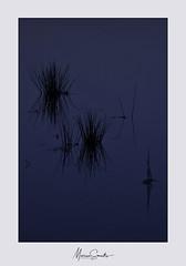 Blue mood (Marian Smeets) Tags: minimalism minimalisme blue blauw water natuur nature natuurfotografie sittard nikond750 nederland dutch dutchlandscape nederlandslandschap mariansmeets 2019