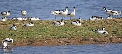 J78A0041 (M0JRA) Tags: rspb blacktoft sands birds flying people ponds lakes trees walks marsh harrier