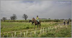 No 3 DSC_2938 (dark-dave) Tags: scottishenduranceridingclub scotland hutton fishwick scottishborders horse rider sport endurance female person people countryside