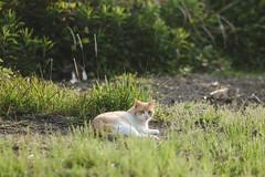 猫 (fumi*23) Tags: ilce7rm3 sony sel85f18 a7r3 animal harbor katze neko cat chat gato 猫 ねこ ソニー apsccrop