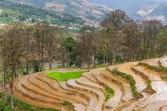 _Y2U8491.0513.Bản Dền.Thanh Kim.Sapa.Lào Cai (hoanglongphoto) Tags: asia asian vietnam northvietnam northwestvietnam northernvietnam landscape scenery vietnamlandscape vietnamscenery sapalandscape terraces terracedfields transplantingseason sowingseeds canon canoneos1dx canonef70200mmf28lisiiusm tâybắc làocai sapa thanhkim bảndền phongcảnh ruộngbậcthang mùacấy sapamùacấy phongcảnhsapa ruộngbậcthangsapa