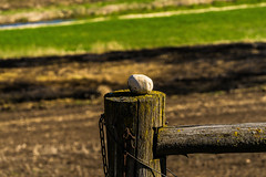 _DSC4024 (Simply Angle) Tags: sony sonyphotography sonyphotographing sonya7ii ilce7m2 ilce chewelahwa chewelah washington outdoors sunlight life fe70300mmf4556goss sel70300g stone post wood