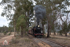 Eucalyptus Meets Crude (R Class Productions) Tags: steam train locomotive victorian railways oil burner smoke vr j549 vgr goldfields
