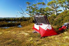 20190419-38-Tents on Gould Plateau (Roger T Wong) Tags: 2019 australia cradlemountainlakestclairnationalpark glouldplateau lakestclair msrhubbanx np nationalpark rogertwong sel24105g sony24105 sonya7iii sonyalpha7iii sonyfe24105mmf4goss sonyilce7m3 tasmania bushwalk hike outdoors tent tents tramp trek walk