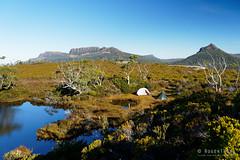 20190419-44-Tents on Gould Plateau (Roger T Wong) Tags: 2019 australia cradlemountainlakestclairnationalpark glouldplateau lakestclair msrhubbanx macpacmicrolite np nationalpark rogertwong sel24105g sony24105 sonya7iii sonyalpha7iii sonyfe24105mmf4goss sonyilce7m3 tasmania bushwalk hike outdoors pond reflection tent tents tramp tran trek walk water