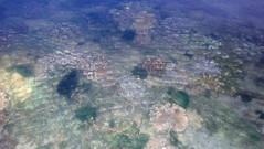 Leathery soft coral (Family Alcyoniidae) (wildsingapore) Tags: sentosa serapong alcyonacea alcyoniidae cnidaria island singapore marine coastal intertidal shore seashore marinelife nature wildlife underwater wildsingapore
