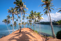 20190413-IMG_7254.jpg (Dhammika Heenpella / CWSSIP Images of Sri Lanka) Tags: dhammikaheenpella මිරිස්ස clusterofcoconuttreesbythesea ශ්රීලංකාවේචායාරූප ධම්මිකහීන්පැල්ල coconuttreehill ශ්රීලංකාවේෆොටෝ imagesofsrilanka srilanka mirissa කොකනට්ට්රීහිල් ශ්රීලංකාව traveldestination placesofinterest