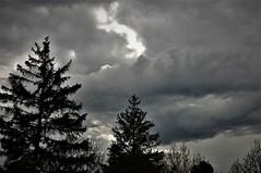 Pinos y nubes (enrique1959 -) Tags: martesdenubes martes nwn nubes navarra iratxe ayegui españa europa