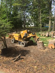 1B6F7865-367C-478E-B232-1C5C4232C825 (Lakeview Stump Grinding) Tags: lakeview columbia strongsville stump grinding ohio station north royalton cleveland berea olmsted falls landscaping bay village northeast service grind removal