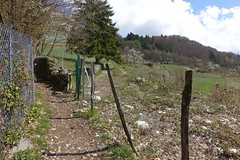 Menthon-Saint-Bermard @ Hike to Château de Menthon-Saint-Bernard, Rochers des Moillats & Ermitage de Saint-Germain (*_*) Tags: april afternoon spring printemps 2019 sunny europe france hautesavoie 74 annecy savoie hiking walk marche randonnee nature mountain montagne menthonsaintbernard trail