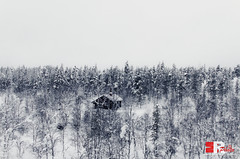 the house in the forest (Michele Rallo - MR PhotoArt) Tags: michelerallomichelerallomrphotoartemmerrephotoartphotopho lapland lapponia finlandia finland polo north northern world mondo viaggio viaggi travel adventure avventura snow neve nordico paese paesi regione region arctic landscape skyline natura nature trees