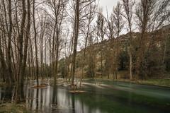 Perejil subacuático. (Amparo Hervella) Tags: soria españa spain paisaje río agua árbol naturaleza cielo rio largaexposición d7000 nikon nikond7000