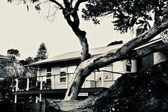 A Summer Place (jack eastlake) Tags: tathra beach house houses summer place timber cottages bega valley far south coast nsw build building surfing bw mono