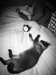 Tic, tac, tic, tac, zzzzzzzzzzz (nuriapase) Tags: blackandwhite black white monocrome blancoynegro gato animal cat people dream sleep iphone swatch