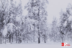 somewhere out in Lapland (Michele Rallo - MR PhotoArt) Tags: michelerallomichelerallomrphotoartemmerrephotoartphotopho lapland lapponia finlandia finland polo north northern world mondo viaggio viaggi travel adventure avventura snow neve nordico paese paesi regione region arctic landscape skyline natura nature trees