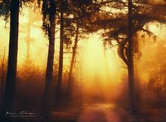 Morning fog dissolves (keesvandongen) Tags: heather sunset sunrise dusk dawn naturephotography nature mood light sunlight warm mist misty fog foggy water channel landscape landscapephotography skyscape sky night keesvandongen keske thenetherlands trees woods tree wood twilight forest
