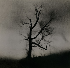 Tree Stories (micalngelo) Tags: tree baretree alternativephotography alternativeprocess analog filmphoto lithprint lithprocess moerschlith holga fomapan100film lomography lomojunkie plasticcamera toycamera toycameraphotography