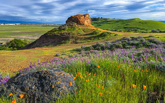 Poppies, Lupines and Rocks (Jerry Ting) Tags: coyotehillsregionalpark fremont california ebparksok ch