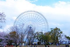 04/02 - Day3 (Rice Tsai) Tags: 萬博紀念公園 大阪 關西 日本 櫻花 櫻 夜櫻 fujifilm xt3