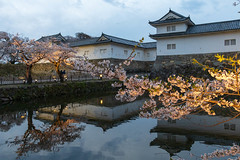 Cherry blossoms and castle (yukky89_yamashita) Tags: 彦根城 佐和口 滋賀 彦根市 hikone castle japan shiga spring moat cherryblossoms sakura reflection