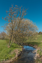 Springtime on Hutton Beck Apr 2019 (Richard Laidler) Tags: beck bluesky bright clear cloudless deep huttonmagna landscape northeastengland rural spring stream sunny sunshine teesdale tree willow