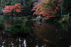 成田山公園(Narita Park) (Zweihänder) Tags: 千葉 成田 池 紅葉 japan chiba narita pond d850 nikkor autumn