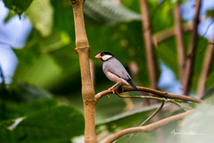 Bout du monde (Anne Sarthou . Photographie) Tags: beauval animal animaux animals zoo zooparc animalier oiseau bird