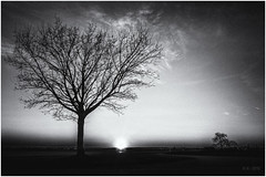 Disappearing Sun... (Ody on the mount) Tags: anlässe bäume em5ii fototour gegenlicht himmel landschaft mzuiko918 omd olympus pflanzen sonne sonnenstrahlen sonnenuntergang wolken bw landscape monochrome sw sunset tree