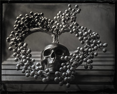 Heart & Skull (negative with New Guy positive collodion) (Blurmageddon) Tags: 4x5 largeformat wetplatecollodion senecaimprovedview 4x5reducingback silversunbeamdeveloper collodionnegative ammoniumthiosulfate stilllife alternativeprocess newguypositivecollodion epsonv700 skull heart