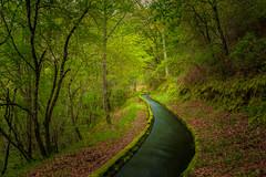 Waterway (Artur Tomaz Photography) Tags: green leafs levada ribafeita spring barragem nature orange paisagem waterway água water forest tree