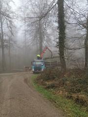 IMG_20190415_093444_BURST002 (eduard43) Tags: wald forest bäume trees 2019 rafz waldarbeiten