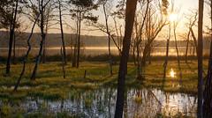 Lakeside sunrise (eichlera) Tags: lake swamp sunrise sun sunlight nature morning water trees zurich switzerland