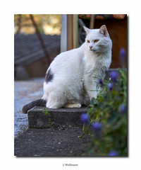 DSC07308 (J.Wolfmaier) Tags: sonyalpha cat cats animal