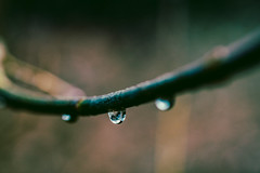 Rainy Gloomy Spring Day (Nicholas Erwin) Tags: nature macro closeup bokeh depthoffield weather spring rain raindrops raindrop outside outdoors moody gloomy branch fujifilmxt2 fujixt2 xf60mmf24rmacro xf60 6024 fujixf6024 waterbury vermont vt unitedstatesofamerica usa america waterdrop waterdroplets waterdrops fav10 fav25
